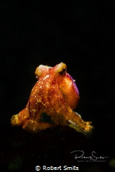 Did you know that this octopus usually burries themselves... by Robert Smits